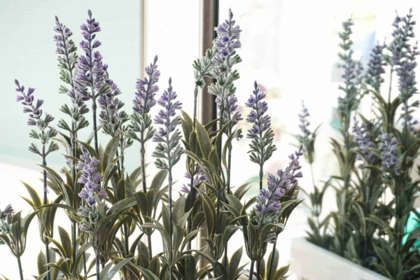 Lavender Makes a Perfect Decor Piece for Spring Decorations